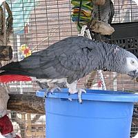 Adopt A Pet :: Barney - Christmas, FL