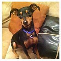 Adopt A Pet :: DINO - Gilbert, AZ