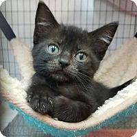Adopt A Pet :: Ivy - Umatilla, FL