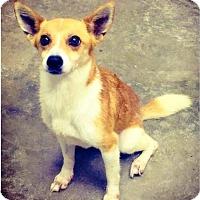 Adopt A Pet :: Winston - Sanford, NC
