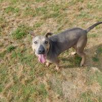 Adopt A Pet :: Buster - Savannah, TN