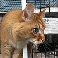 Adopt A Pet :: Babe - Denver, CO