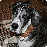 Adopt A Pet :: LuLu - Phoenixville, PA