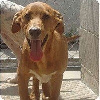 Adopt A Pet :: Fred - Winter Haven, FL