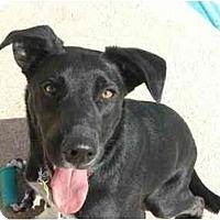 Adopt A Pet :: Brodey - Phoenix, AZ