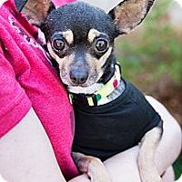 Adopt A Pet :: Magdalene