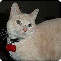 Adopt A Pet :: Jewels - Farmington, AR