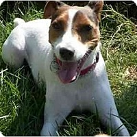 Adopt A Pet :: Diesel - Omaha, NE