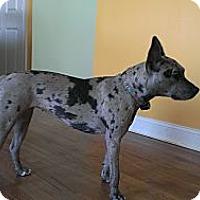 Adopt A Pet :: NALA-JJ - Roundup, MT