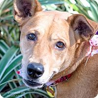 Adopt A Pet :: Demi - Gainesville, FL