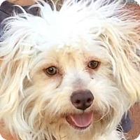 Adopt A Pet :: GARTH (video) - Los Angeles, CA
