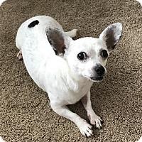 Adopt A Pet :: Minnie - Avon, NY