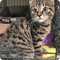Adopt A Pet :: Roosevelt - East Brunswick, NJ