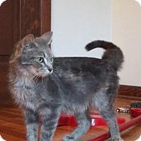 Adopt A Pet :: Joy - Caro, MI