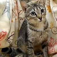 Adopt A Pet :: Karma - Richmond, VA