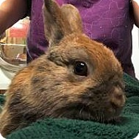 Adopt A Pet :: Longfellow - Woburn, MA