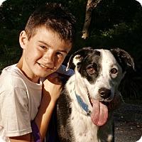 Adopt A Pet :: OREO - Media, PA