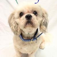Adopt A Pet :: Teddy - Bradenton, FL