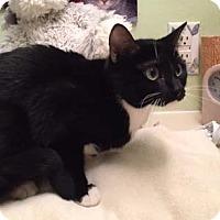 Adopt A Pet :: Minnie Mouse - Merrifield, VA