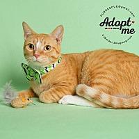 Adopt A Pet :: Declyn - Pearland, TX