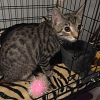 Adopt A Pet :: Romeo (teenage boy) - Harrisburg, PA