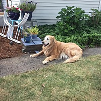 Adopt A Pet :: Ella - New Canaan, CT