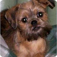 Adopt A Pet :: DALLAS in Natchez, MS. - Jackson, MS