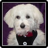Adopt A Pet :: Hunter - Covina, CA