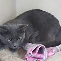 Adopt A Pet :: Edgar - tama, IA