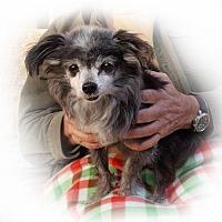 Adopt A Pet :: Oliver - Lago Vista, TX