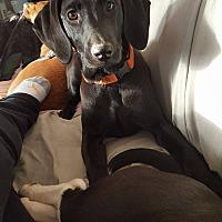 Adopt A Pet :: Mandy - Mount Holly, NJ