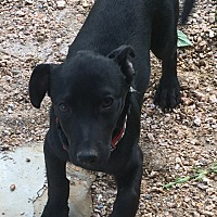 Dachshund/Mixed Breed (Small) Mix Dog for adoption in Kingwood, Texas - Junior