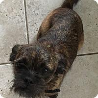Adopt A Pet :: Mia (ETAA) - Harrisonburg, VA