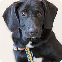 Adopt A Pet :: Swanson - Garner, NC