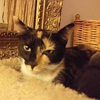 Adopt A Pet :: Annie - Clayton, CA