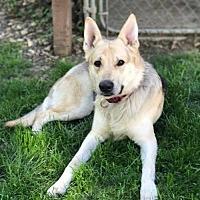 Adopt A Pet :: Doyle - Gretna, NE
