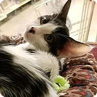 Adopt A Pet :: AIMEE - Diamond Bar, CA