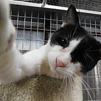 Adopt A Pet :: Graham - Montgomery City, MO