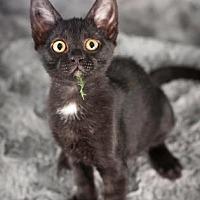 Adopt A Pet :: Bruce - Gainesville, FL
