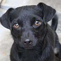Adopt A Pet :: NOMEX - Red Bluff, CA