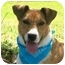 Photo 1 - Boxer/Terrier (Unknown Type, Medium) Mix Dog for adoption in Portsmouth, Rhode Island - Kirby