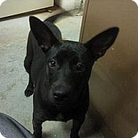Adopt A Pet :: RUBY - Bluff city, TN