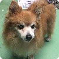 Adopt A Pet :: Natalie - New York, NY