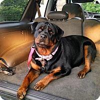Adopt A Pet :: Melissa - Toms River, NJ