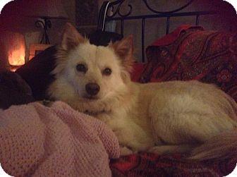 Pomeranian Mix Dog for adoption in Warner Robins, Georgia - Edgar