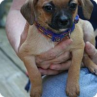Adopt A Pet :: Sassy - Arden, NC