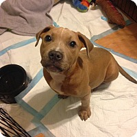 Adopt A Pet :: Mazy - East Rockaway, NY