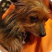 Adopt A Pet :: Jasper - Lancaster, TX