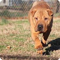 Adopt A Pet :: Sweet Pea - Houston, TX