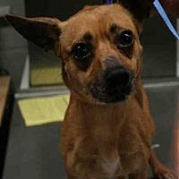 Adopt A Pet :: BOLT - Aurora, IL